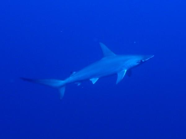 Jetty Dive Tufi PNG trip