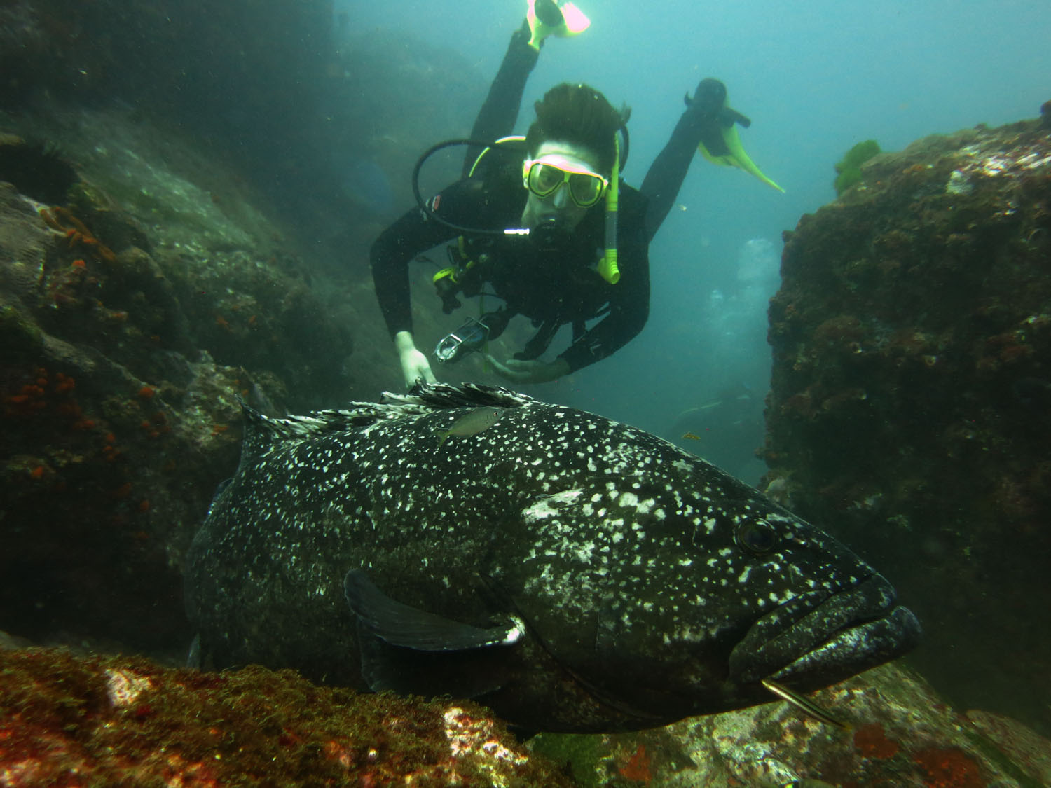 Black Cod with Sam at South Solitary Island