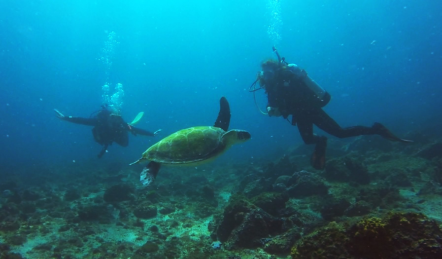 Turtle with Nikki and Adam