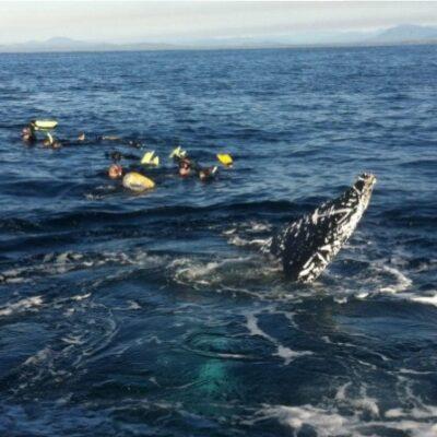 Whale Swim August 2017