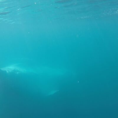Humpback whale underwater by stuart