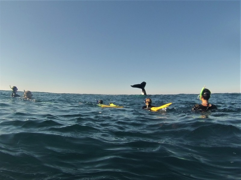 Whale tail with snorkellers