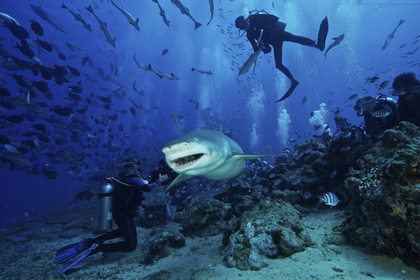 FIJI Shark Dive Trip, Beqa Lagoon June 2019
