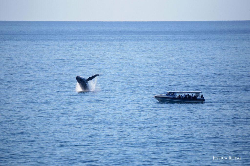 Jessica Royal Whale Breach Photo