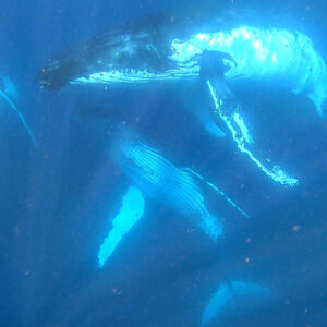 Kate Mercer18.8.18 whales