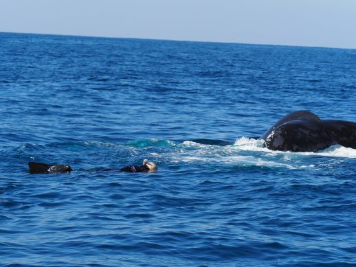 Whale Swim at Coffs Harbour 25.08.18