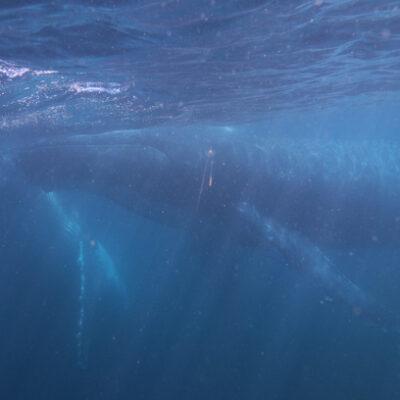 Whale Swim 8.8.18