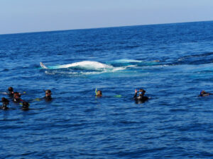 Whale Swim Coffs harbour