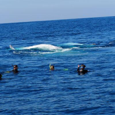 Whale Swim Coffs harbour
