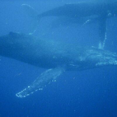 Whale swim 26.09.18