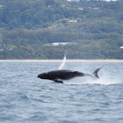 Raquel Calf full breach Jetty Dive Centre