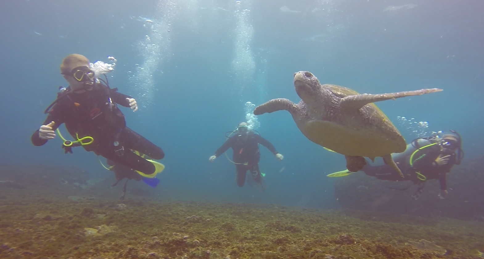 Turtle and Students 19-11-18