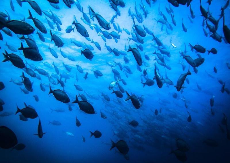 scuba diving coffs harbour