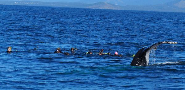Jetty Dive Whale-Swim 18.08.19