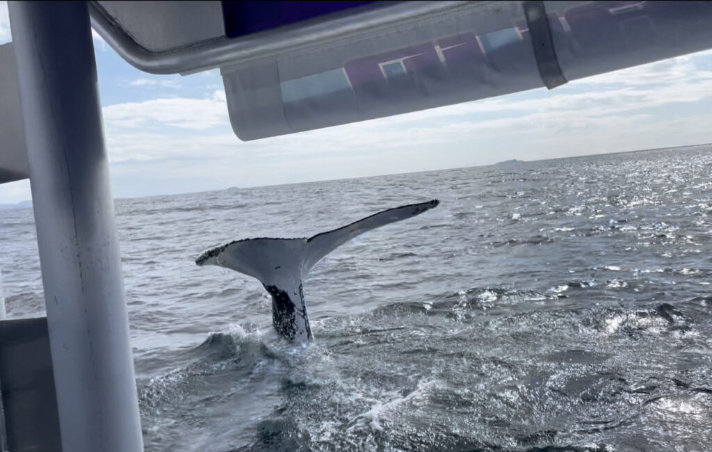 whale watch 20.8.21
